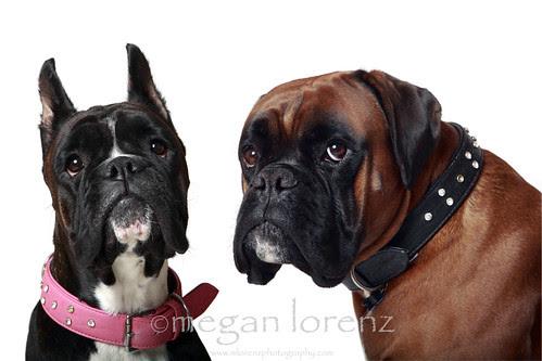 Boxers! by Megan Lorenz