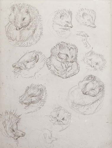 Studies for Miss Tiggy-winkle