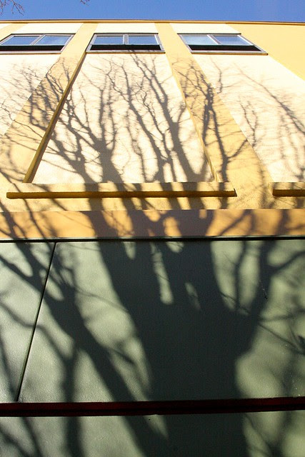 shadows, burnside