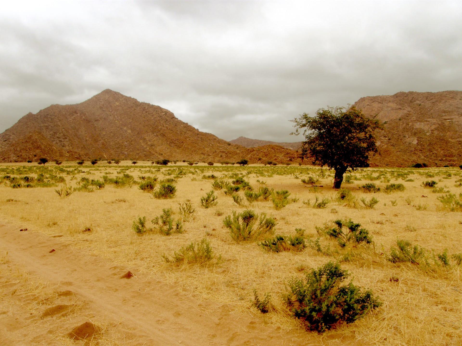 Hills And Desert