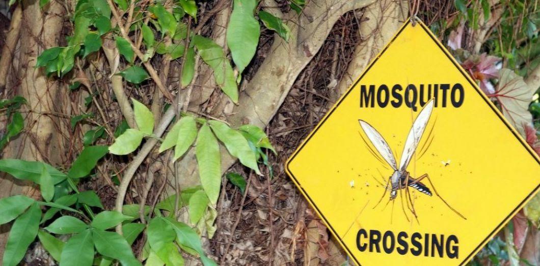 """Résultat de recherche d'images pour """"moustiques"""""""