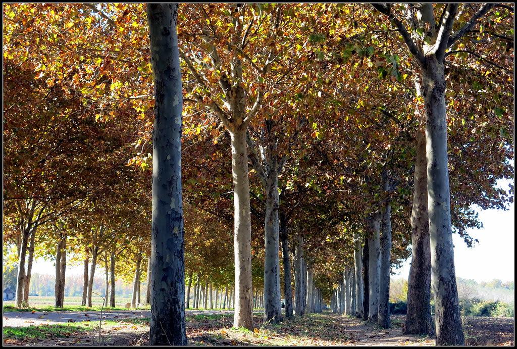 otoño de 2013 en Aranjuez