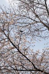 Cherry and Bird