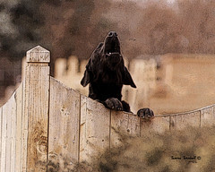 Barking Dog by justice42