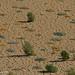 israel2012-desert-21