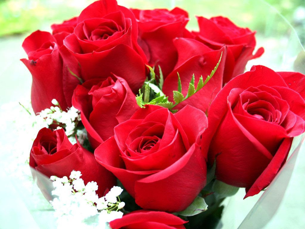 Beautiful Rose Flowers Wallpapers Sf Wallpaper
