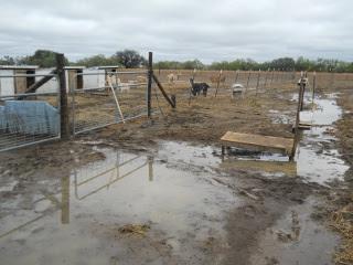 Drought 2011 Oct Rain Fields