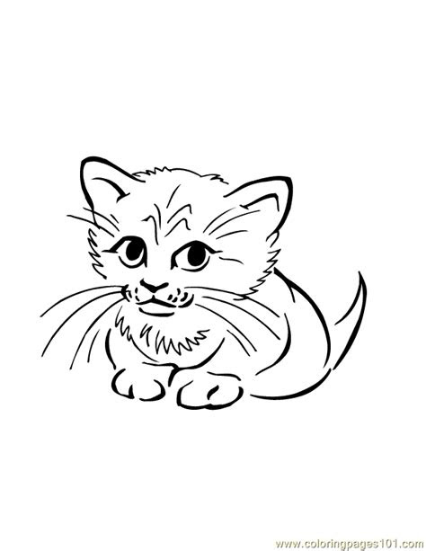 baby cat coloring page  cat coloring pages