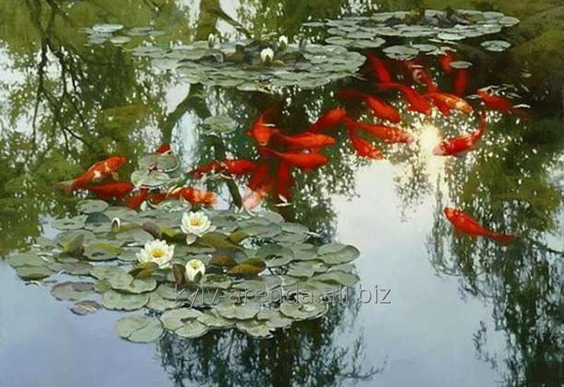 Картинки по запросу рибки ставкові
