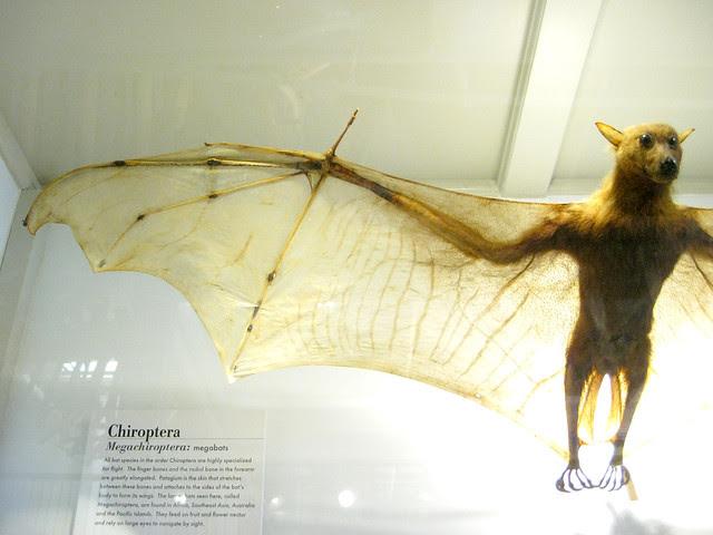 bat specimen II