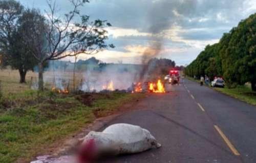 Automóvel pega fogo após atropelar vaca na PR-182