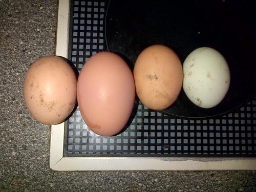 eggs Mar 13