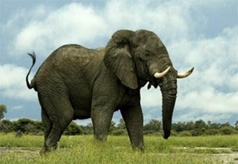 A fricken elephant
