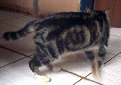 Hebohh... Kucing Berlafadz Allah Dari Samarinda