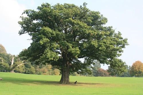 Cerita Motivasi – Pohon Ek (Oak)