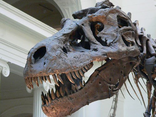 Tyrannosaurus Rex Sue