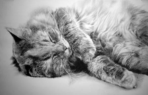 15 γάτες που δεν θα πιστεύετε ότι είναι μόνο σκίτσα με μολύβι (1)
