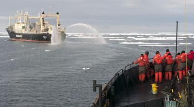 A la caza del ballenero japonés en la Antártida