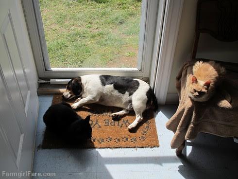 Bert and cats (1) - FarmgirlFare.com