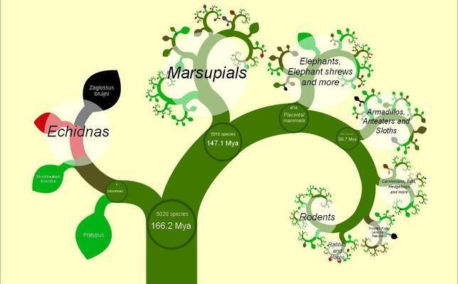 El Primer árbol De La Vida En Internet Abces