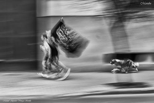 Mundo perruno en movimiento, Santiago de Chile by Alejandro Bonilla