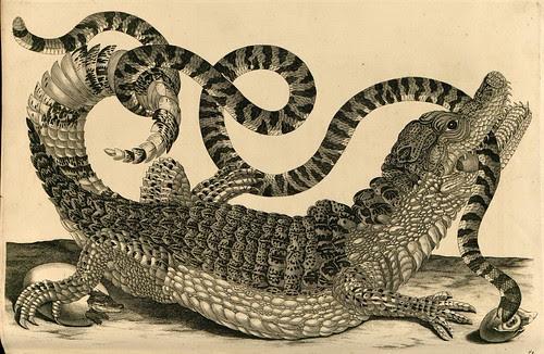 alligator by Maria Sibella Merian