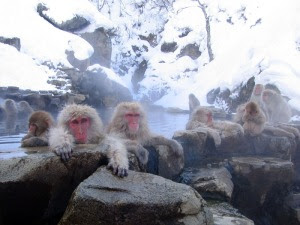 Snow Monkeys in a Hotspring at Jigokudani, Nagano