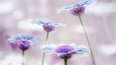 Download 1920x1080 HD Wallpaper lilac violet blue close up