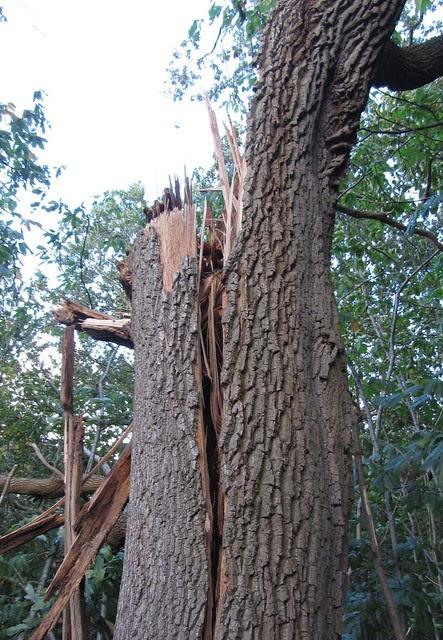 IMG_4464 St Jude storm damage 2013