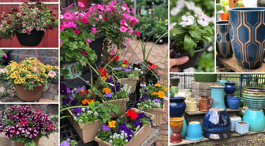 Daniel S Lawn Garden Annuals Perennials Shrubs More