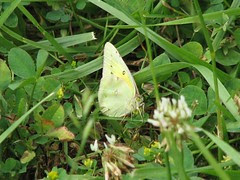 Pale green and yellow