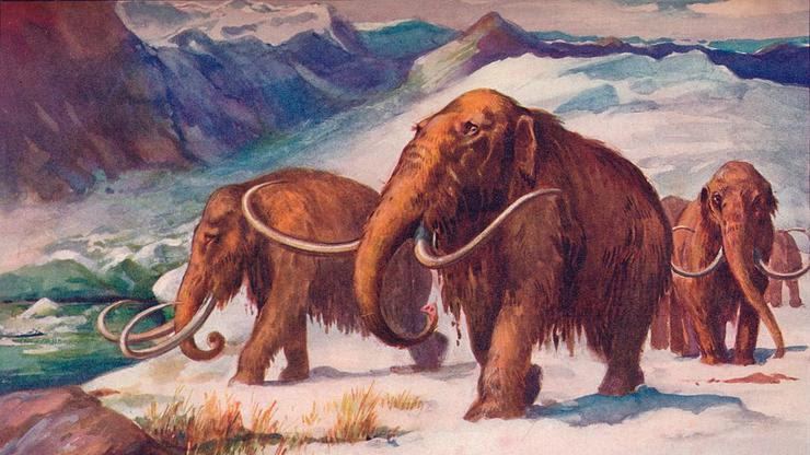 Scientists Set Sights On Wooly Mammoth Revival