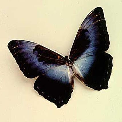 ButterFly - JANSI KI RANI Photo (23071154) - Fanpop