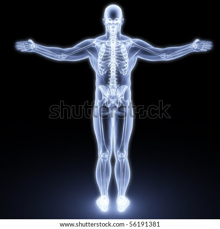 stock photo : human body by X-rays. 3d render