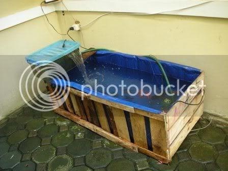 Lele 2010: Kolam Terpal Ikan Lele