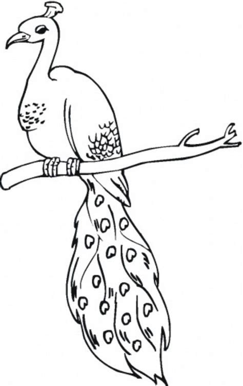 image detail  beautiful bird peacock coloring pages