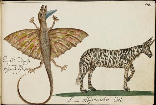 frilled lizard and zebra