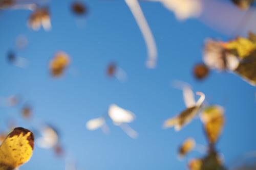 leaves1 copy