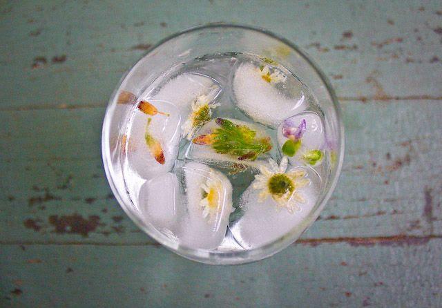 Chamomile ice cubes / Cubos de hielo de manzanilla.  Can also be made with hibiscus flowers,lavander or jasmine.  Pueden hacerse también con jamaica, lavanda o jazmín