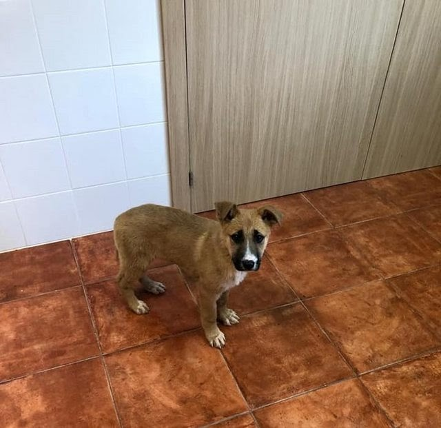 Roma – 6-12 month old female Cross-Breed