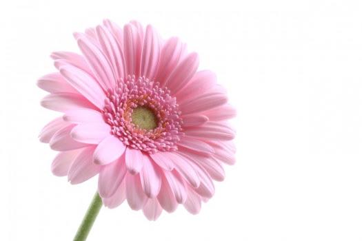 La Flor Generadordeideascom