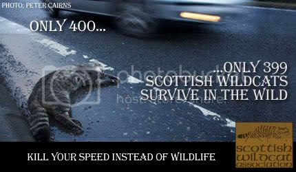 Click here to visit the Scottish Wildcat Association