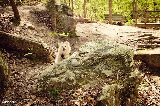 Little Hiking Dog