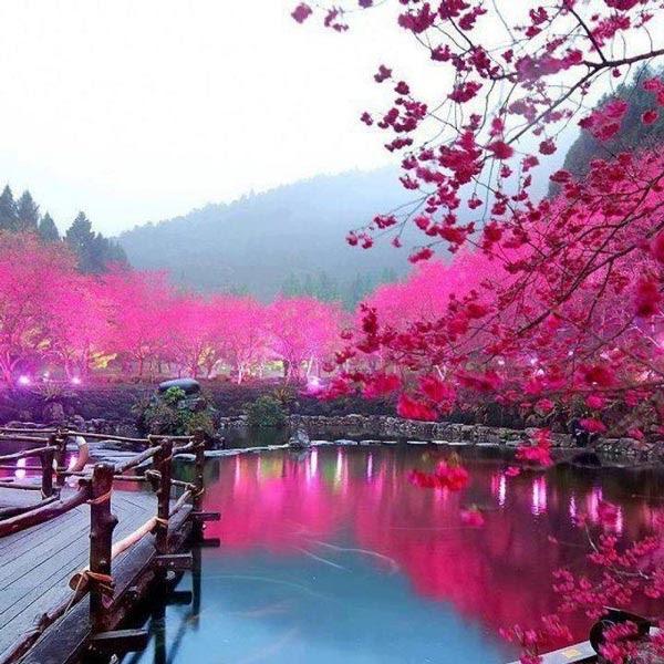 Ανθισμένες κερασιές σε διάφορες πόλεις του κόσμου!