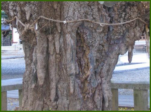 15 sacred tree