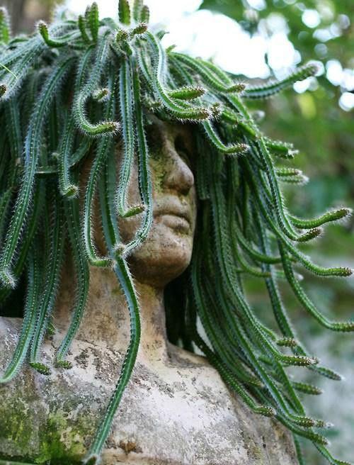 Medusa Cactus