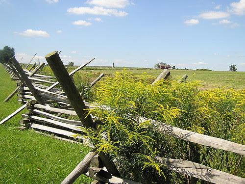 7225 Goldenrod on Virginia Worm Fence - Gettysburg