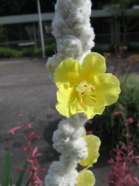 lfp_flower
