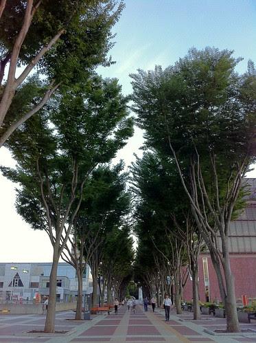 Nice trees at Tsukuba City Center