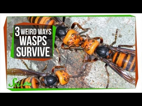 a day in the life of a talk radio blogger online magazine scishow 3 wasps that will do. Black Bedroom Furniture Sets. Home Design Ideas